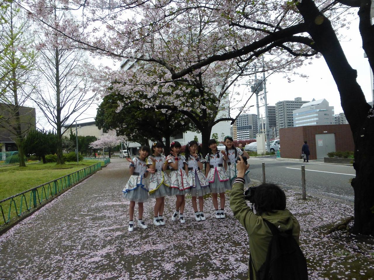 今年の桜は強風の日が多くてあっという間に散っちゃいましたね。(ばってん少女隊)