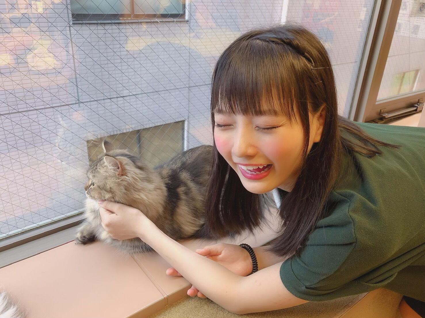 猫よりもたんこのほうが可愛いわ、、、